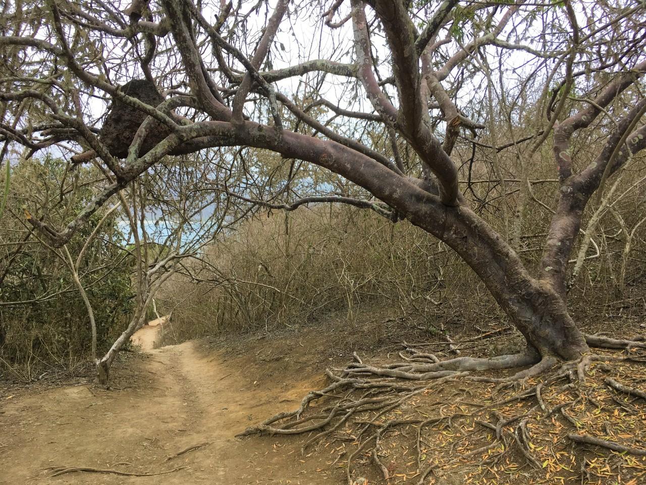 Palo santo, the sacred wood of LatinAmerica