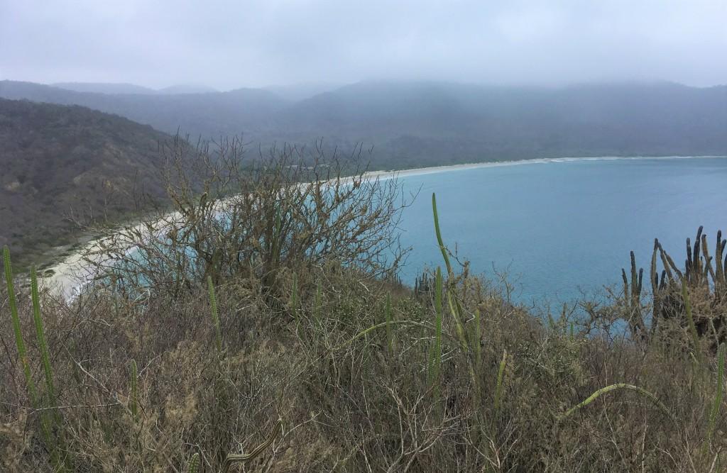 Palo Santo grows at the coastal areas of Ecuador and North Peru